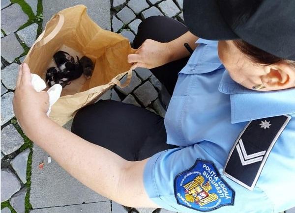 Barbat din Bucuresti, amendat pentru abandonul a 5 pisici