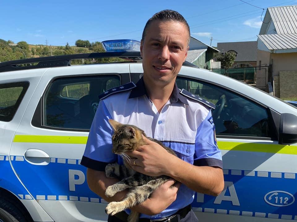 Amenda abandon pisica: 3.000 de lei!