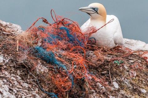 Guvernul interzice mai multe produse din plastic