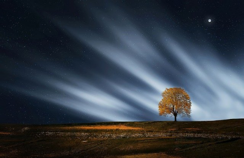 Romania va avea o lege a arborilor remarcabili