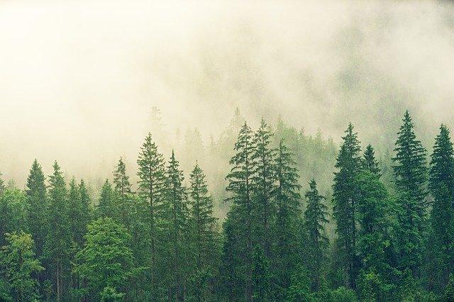 Schimbare majora pentru Codul silvic! Lemnul nu va mai fi valorificat pe picior