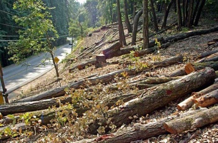 export lemn interzis albania